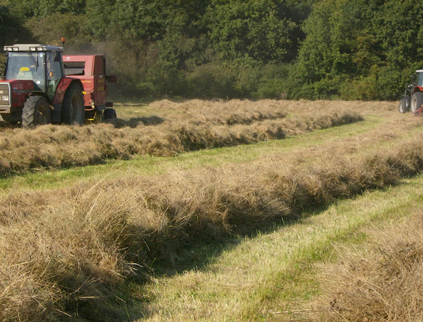 Cutting Hay in Species Rich Meadows