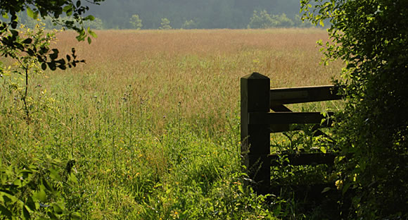 Wildflower meadow in Suffolk
