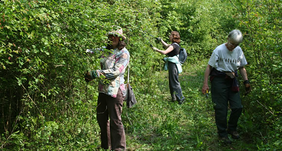 Pruning hedgerows